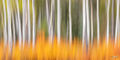 brushfire, kananaskis, alberta, icm,  abstract, autumn, aspen trees, orange, bushes