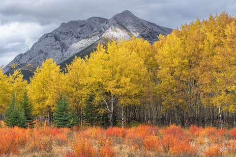 autumn, aspens, rockies, kananaskis