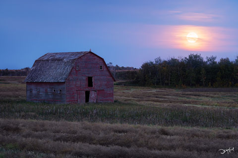 the watcher, saskatchewan, harvest moon, great horned, owl, barn