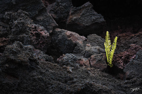 life, hawaii, big island, lava, kupukupu, fern, rock