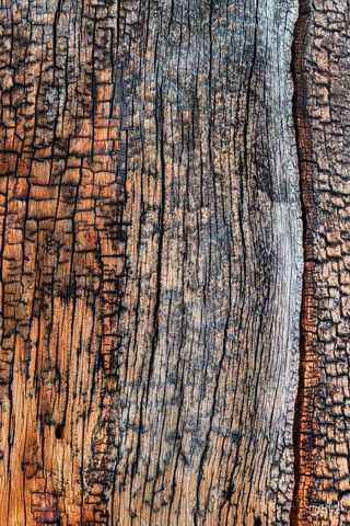 tree, trunk, abstract, forests, banff