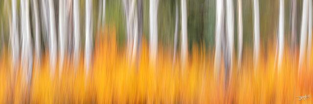 Brushfire Panorama
