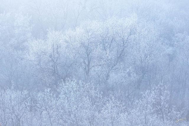 frozen, saskatchewan, rare, fog, hoar frost, forest, trees