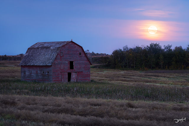 the watcher, saskatchewan, harvest moon, great horned owl, barn