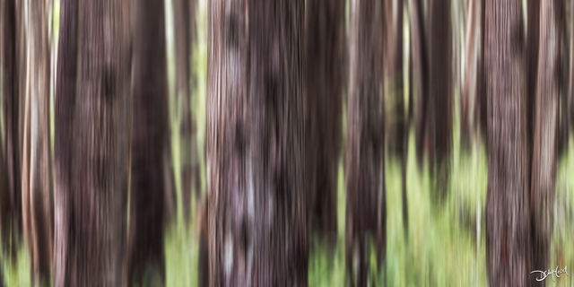 mint chocolate, big island, hawaii, icm, tree,  abstract