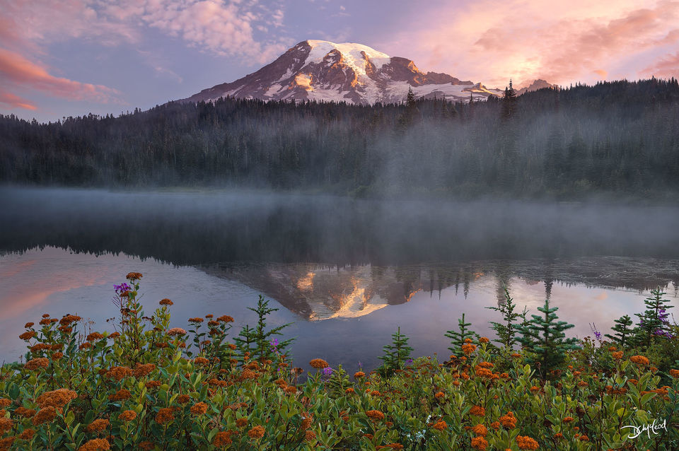 Reflection of Mount Rainier at sunrise in foggy Reflection Lake with flowers and shrubs on the shore.