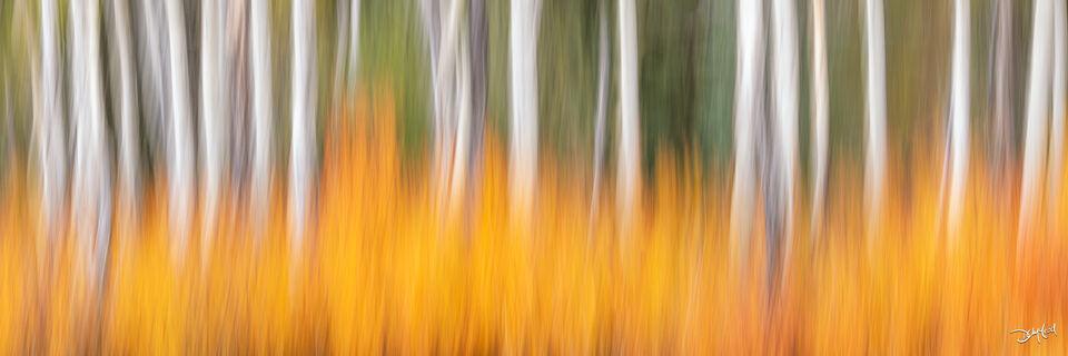 Abstract panorama view of aspen trees and orange bushes in Kananaskis, Alberta, Canada.