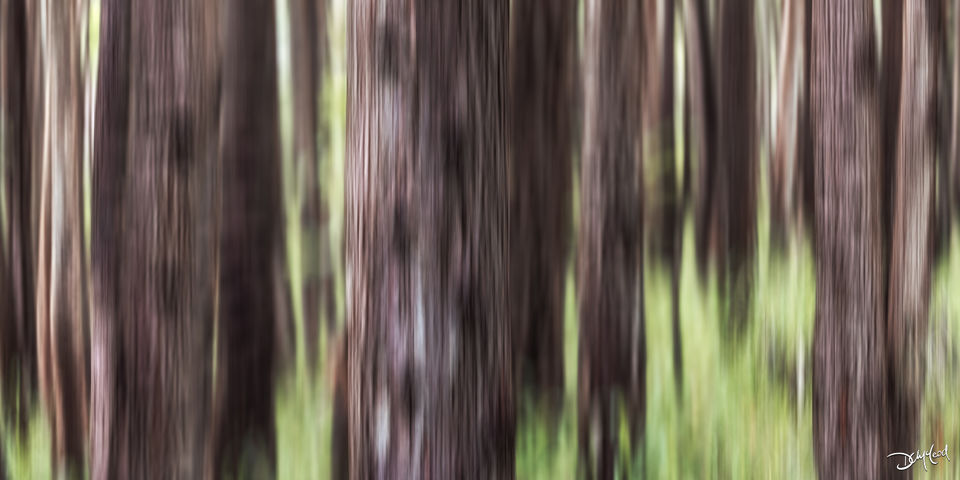 Abstract view of brown tree trunks and green bushes in a forest in Hawaii.