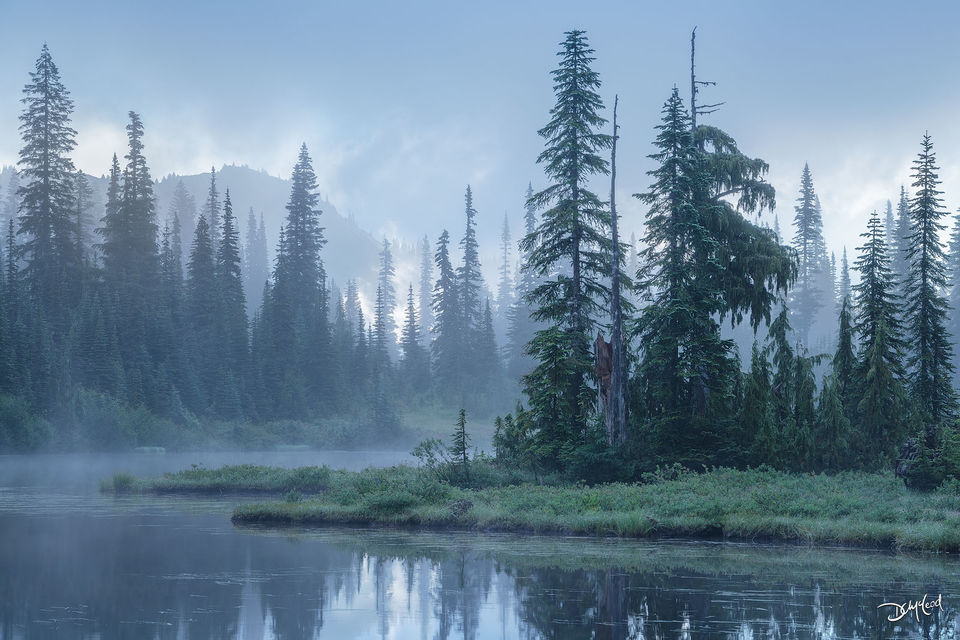 Many spruce trees stand in thick fog on the shores of Reflection lake, Washington at sunrise.