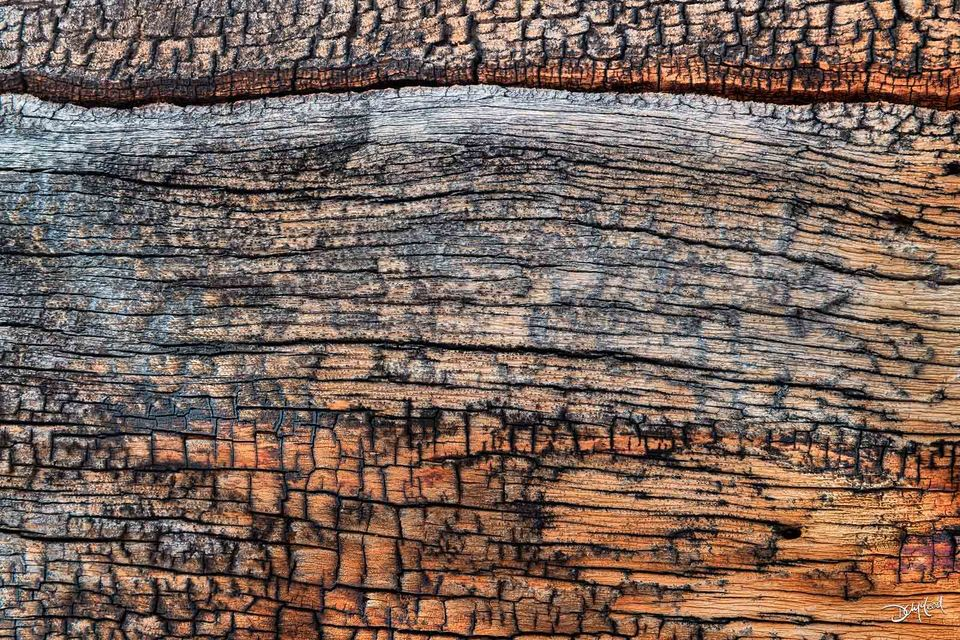 Closeup detailed view of orange bark on a larch tree.