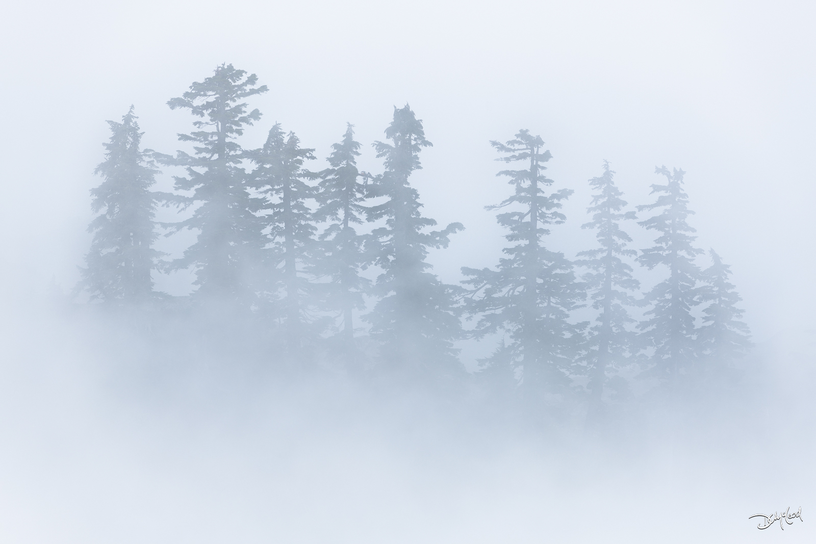 ambiguity, artist point, washington, spruce, trees, fog, shapes, photo
