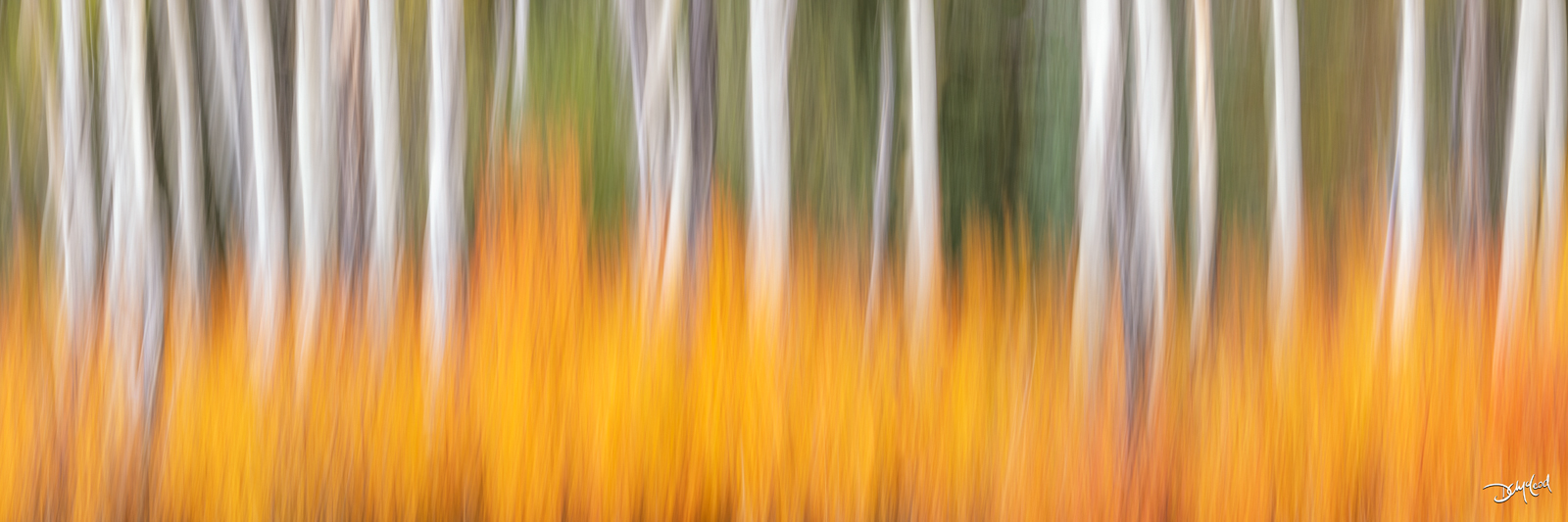Abstract panorama view of aspen trees and orange bushes in Kananaskis, Alberta, Canada.
