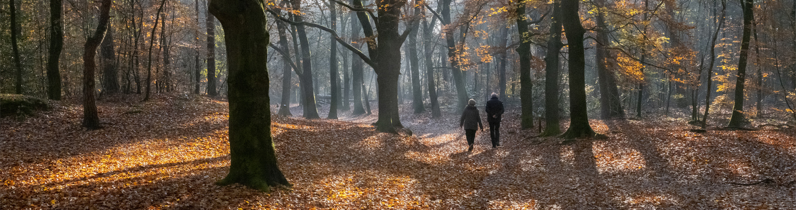 couple walks in autumnal forest near zeist in holland