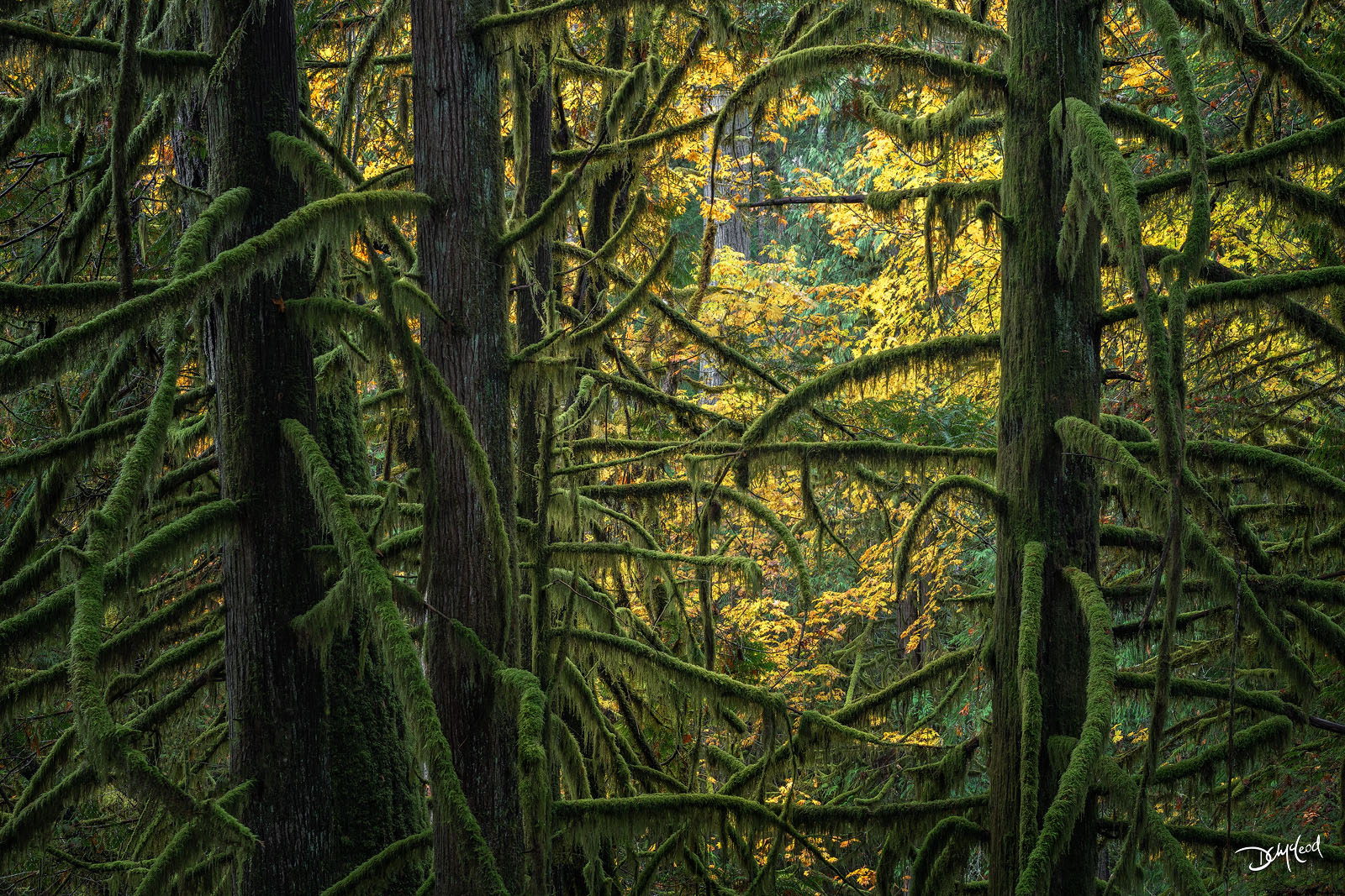 embrace, goldstream provincial park, canada, limited edition, surreal, rain, mossy, forest, photo
