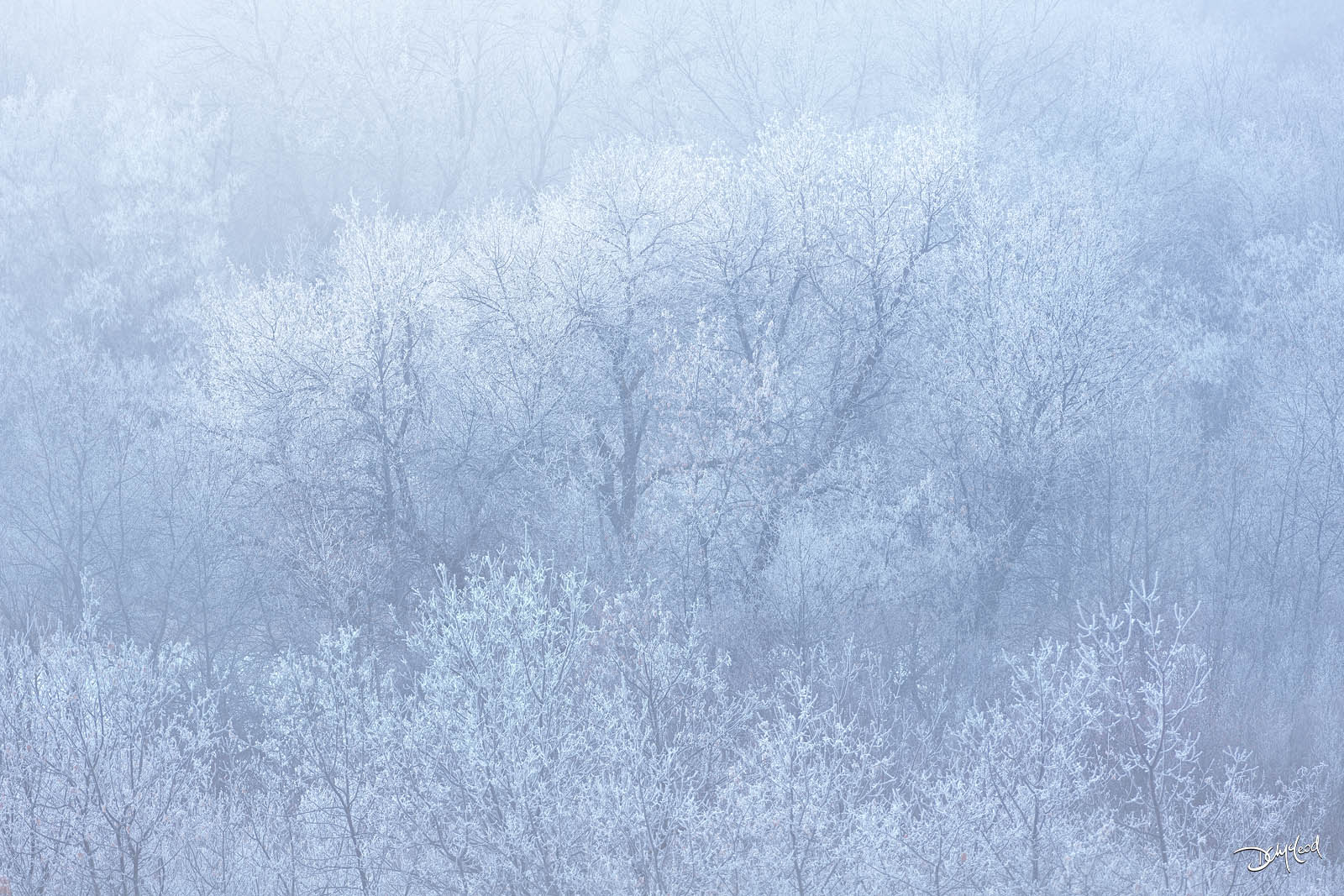 Hoar frost and fog on bushes and trees with a light blue color throughout.