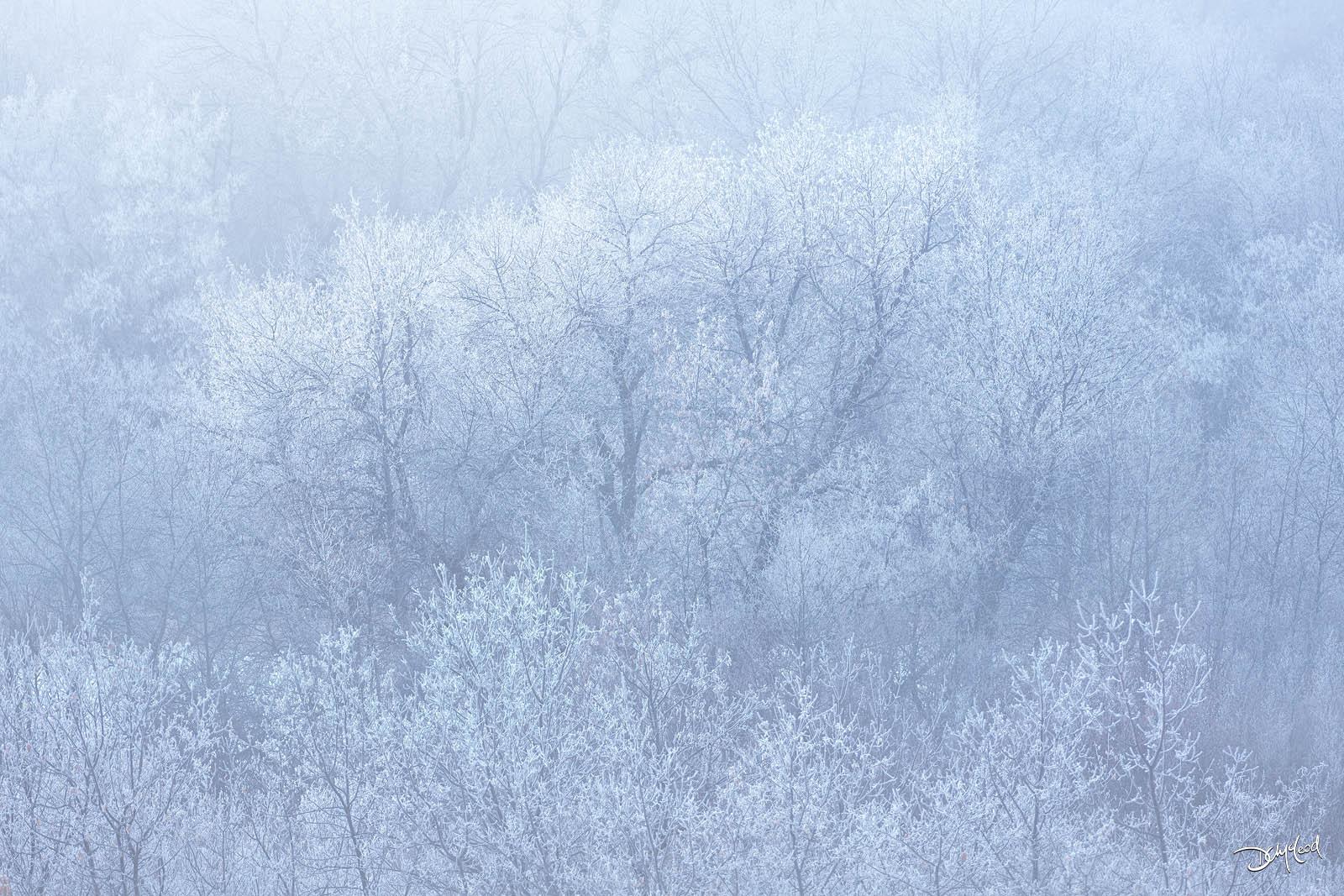 frozen, saskatchewan, rare, fog, hoar frost, forest, trees, photo