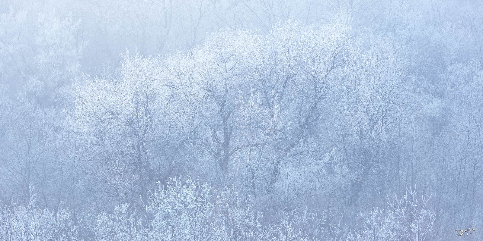 Panorama view of frosty trees and fog in Cranberry Flats, SK, Canada.