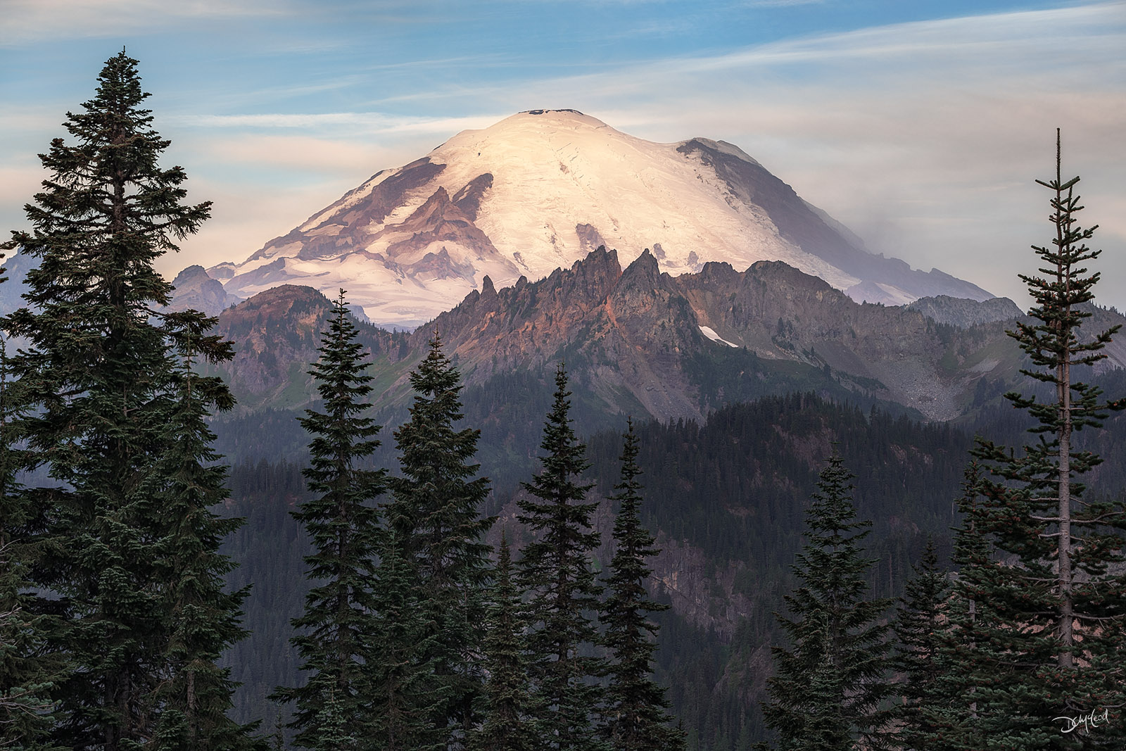 The snow-capped east face of Mount Rainier in Washington state viewed at sunrise through spruce trees in the summertime.