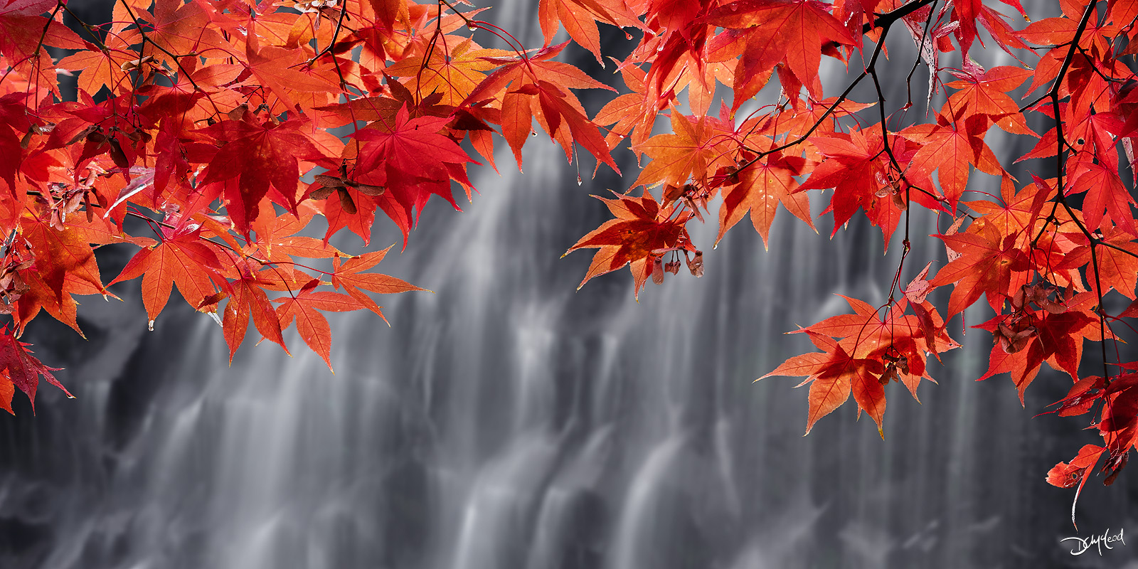 Branches of red maple leaves hang in front of a gently cascading waterfall on Vancouver Island, Canada.