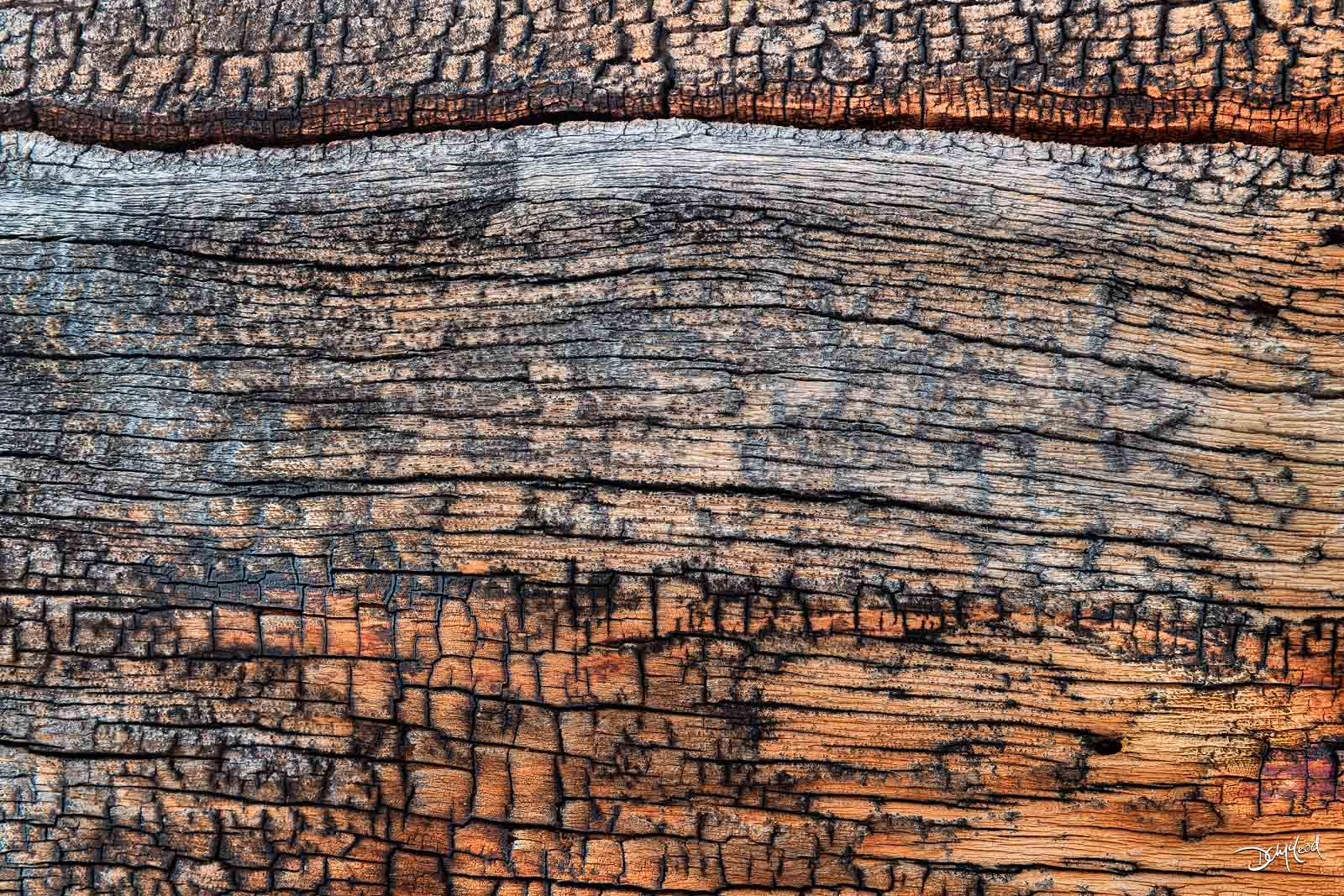tree trunk, closeup, forests, banff, photo