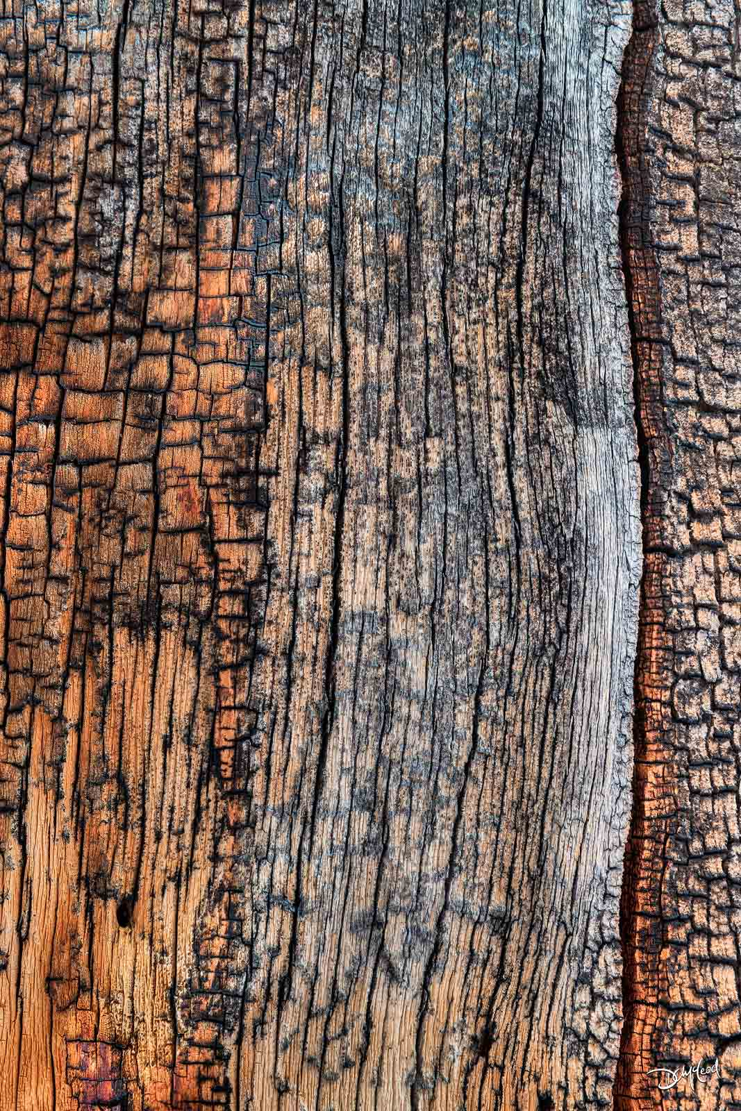 tree trunk, abstract, forests, banff, photo