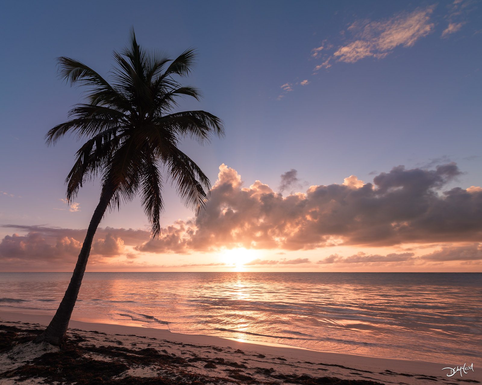 A single palm tree on the beach at sunrise in Punta Cana, Dominican Republic.